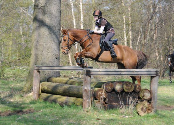 Blidworth Equestrian