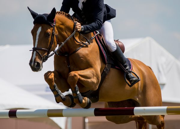 Show Jumping Horse Events