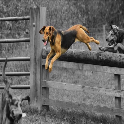 Farmers Bloodhounds 25th August